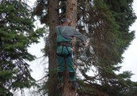 vichřice Herwart vLovosicích poničila několik stromů
