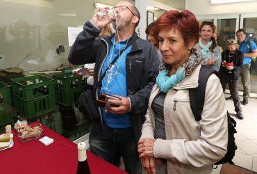 Vinaři otevřou sklepy autobusy pojedou i z Litoměřic a Lovosic