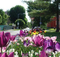 Letní květinová výzdoba města