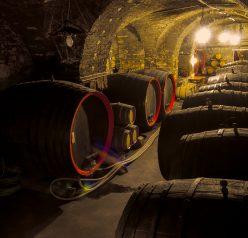 Vinaři na Podřipsku poprvé otevřou své sklepy