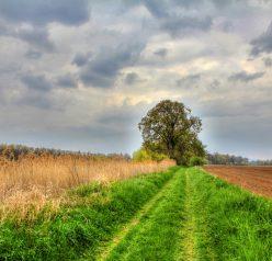 Projekt – Stromy pro Štětsko